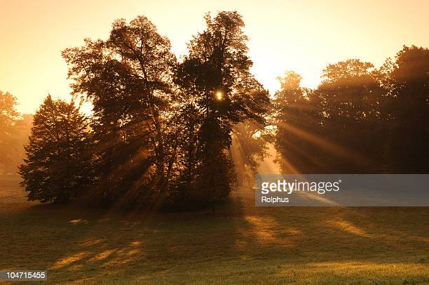 bad muskau pückler park sunrise fall fog - sonnig stock pictures, royalty-free photos & images