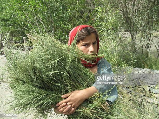 badakhshan1 INPUTDATE 120255160 CREDIT Pamela Constable/STAFF/TWP kesham afghanistan a little girl in badakhshan province carries weeds to use as...