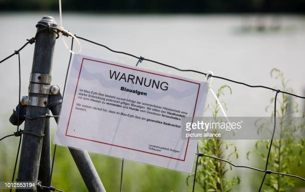 A sign on the shore of Lake MaxEyth warns of bluegreen algae Photo Christoph Schmidt/dpa