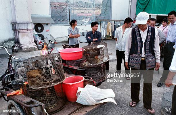 Badgers, rare birds, pangolins and monkeys are sold in the wildlife markets of Mongla, a remote town on the border with China. Much of the wildlife...