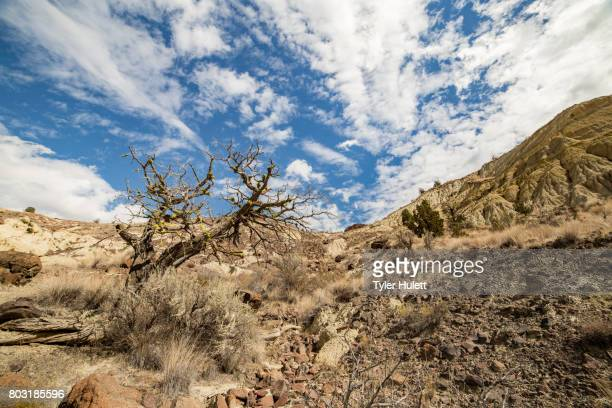 badlands formations juniper snag and sagebrush under a desert sky - western juniper tree stock pictures, royalty-free photos & images