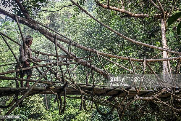 Baduy tribesman looks on a root bridge in a forest in Banten There are around 12000 Baduy tribesmen inhabit the 5000 hectares of tropical forest...