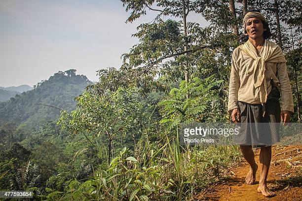 Baduy tribesman walks in the hilly forest area of the mountains in Banten There are around 12000 Baduy tribesmen inhabit the 5000 hectares of...