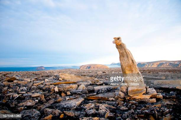 baffin rock sculpture