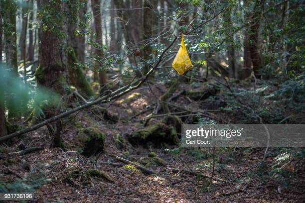 A bag containing discarded snack food and a drink hangs in a tree near the scene of an apparent suicide in Aokigahara forest on March 13 2018 in...