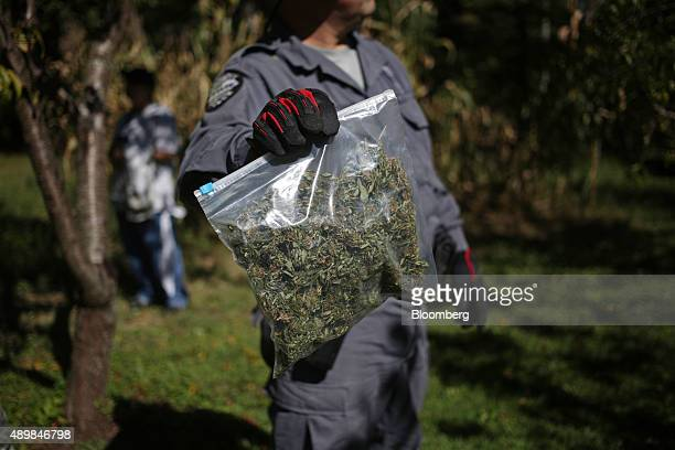 A bag of seized illegal marijuana is displayed for a photograph by a state trooper with the Kentucky State Police Cannabis Suppression Branch in Pine...