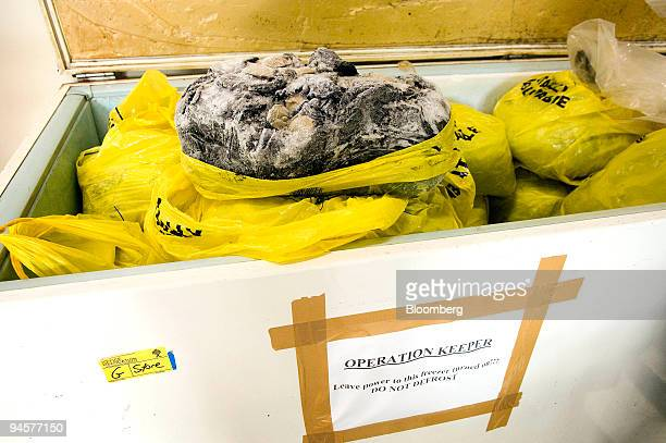 Bags of abalone seized from poachers are stored in a freezer unit at the New Zealand Fisheries office in Wellington New Zealand on Tuesday April 17...