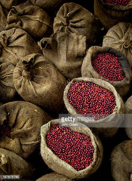 Bags Of Coffee Cherries, El Salvador
