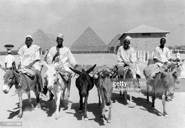 Bags of peanuts are carried with donkeys on January 18 1957 in Kano Colonial Nigeria