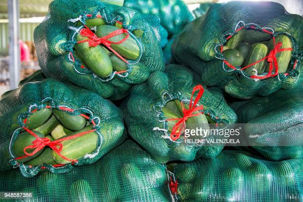 Bags with harvested cucumbers are pictured at a plantation in SaintFrancois on the French overseas territory of Guadeloupe on April 11 2018