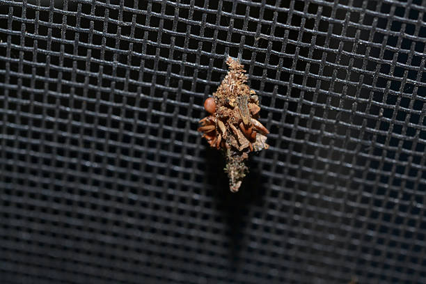 Free bagworm Images, Pictures, and Royalty-Free Stock Photos