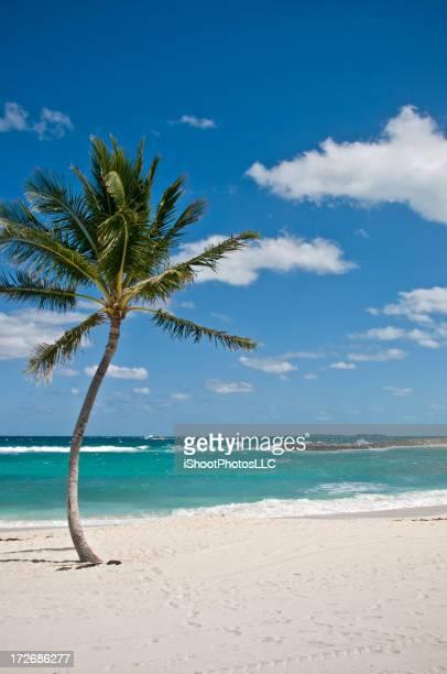 Bahama escapade