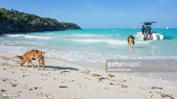 60 Top Exuma Pictures, Photos, & Images - Getty Images