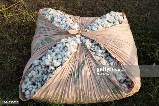 Bahawalpur, Pakistan, 5 October 2018. A bag filled with the day's harvest in a cotton field. Pakistan is one of the world's largest cotton producers.