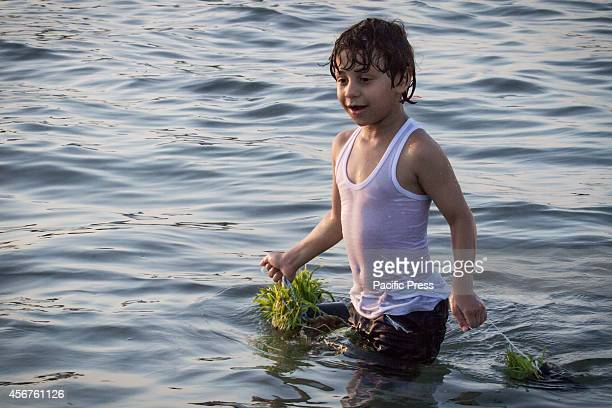 Bahraini child carries barley seedlings into the water at Malkiah beach Devotees throw barley into the water at the end of 'Eid alAdha' one of the...
