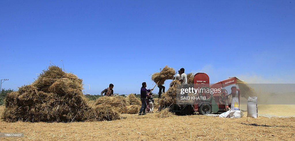 Bailes of wheat are fed through a thresher as members of a Palestinian family harvest their field during the annual harvest season outside the Khan Yunis refugee camp in the southern Gaza Strip on May 15, 2013.