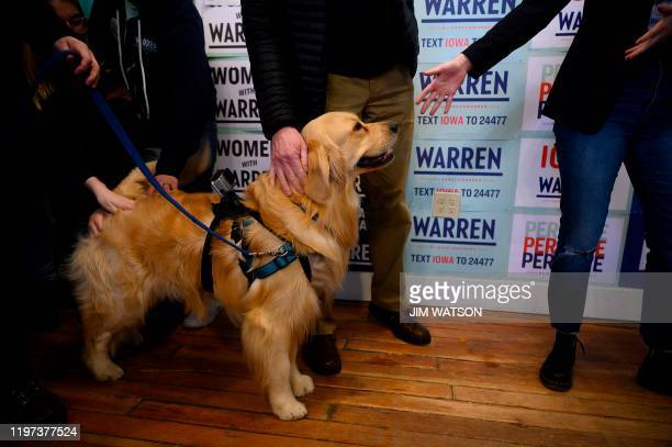 Bailey Warren, Democratic presidential candidate Elizabeth Warren's golden retriever, is introduced with her husband Bruce Mann during a meet and...