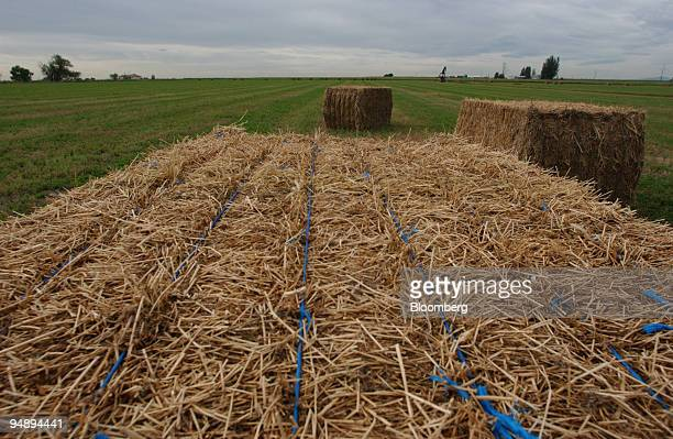 Bails of hay sit in a field near Berthoud Colorado on Tuesday August 24 2004
