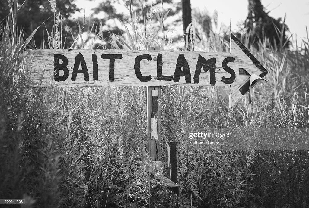 Bait Clams : Stock Photo