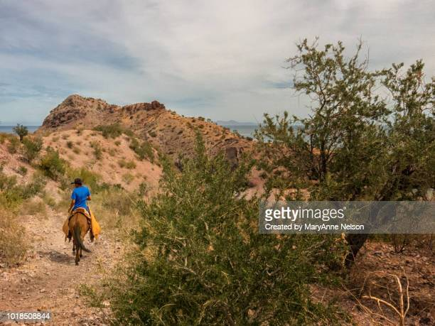 baja cowboy leading - mexican riding donkey stock photos and pictures