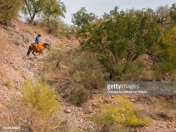 baja cowboy riding in chaps - mexican riding donkey stock photos and pictures