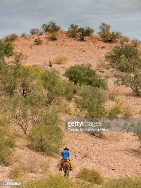 baja cowboy riding in desert on mule - mexican riding donkey stock photos and pictures