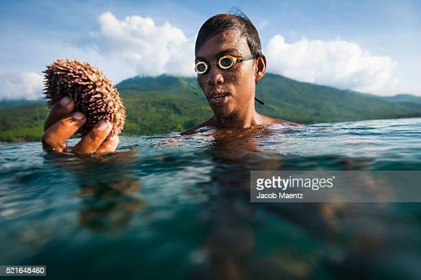 bajau fisherman with sea urchin - bajau stock pictures, royalty-free photos & images