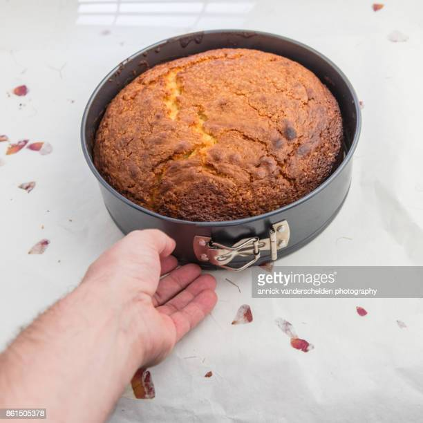 baked yellow cake in springform pan. - human body part stock pictures, royalty-free photos & images