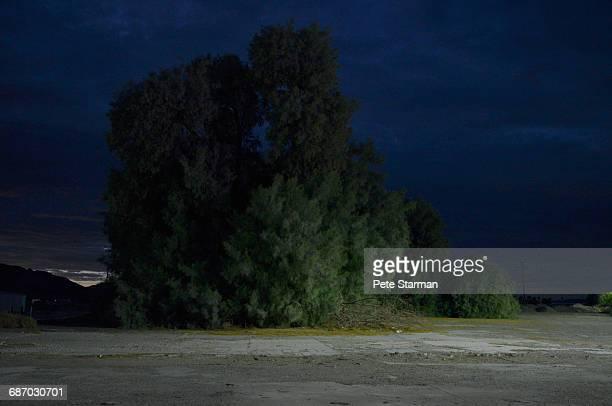 baker cypress trees at edge of parking lot. - カリフォルニア州ベーカー ストックフォトと画像