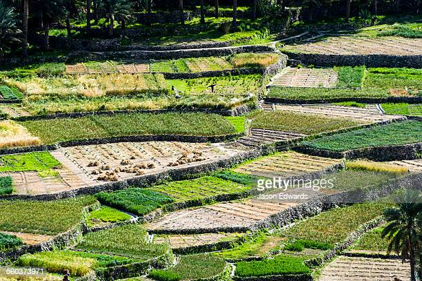 Irrigated terraced farm crops growing garlic, onions and animal feed on the slopes of a desert mountain valley.
