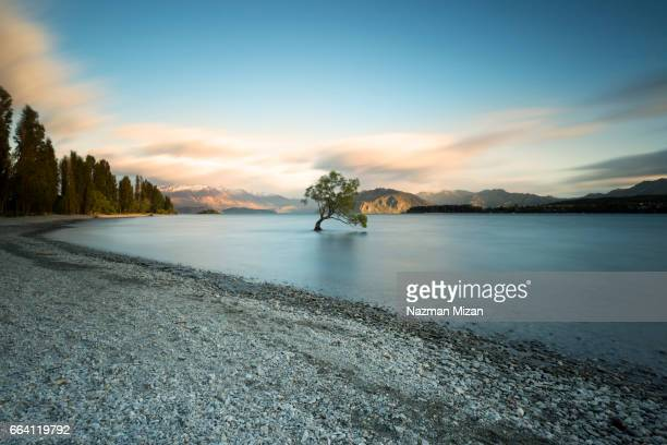 a balance ecosystem in pristine condition. a concept of earth without pollution. - wanaka - fotografias e filmes do acervo