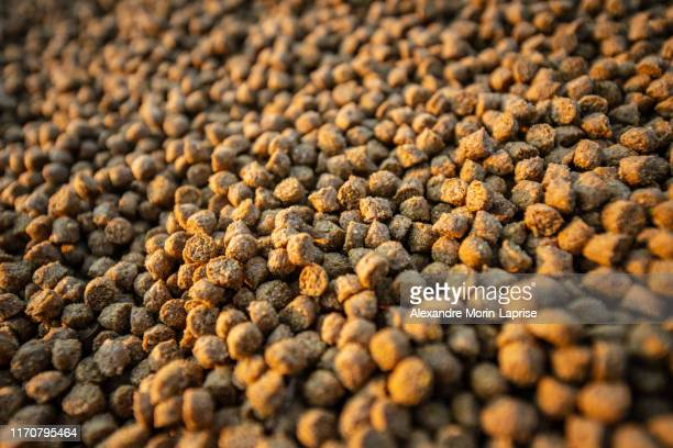 balanced animal food pellets for fish, cow, pig, chicken, duck, horse, etc. made out of corn, soya and meat flours - accouplement cheval photos et images de collection