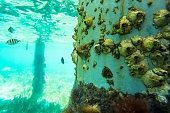 Balanomorphas on an iron column in the sea