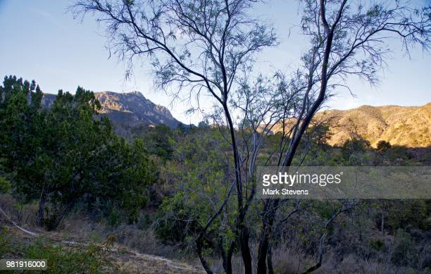 a balcony view at the chisos mountains lodge - chisos mountains stock pictures, royalty-free photos & images
