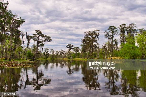 bald cypress reflections - louisiana stock pictures, royalty-free photos & images