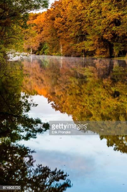 bald cypress reflections - bald cypress tree imagens e fotografias de stock