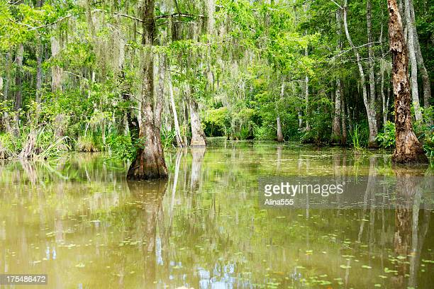 Calvo Cypress Swamp en Louisiana