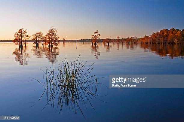 Bald cypress trees and grass reflections in autumn