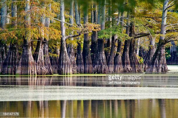 bald cypress trees - アーカンソー州 ストックフォトと画像