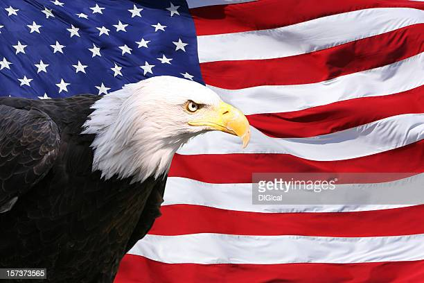 bald eagle american flag - bald eagle with american flag stock pictures, royalty-free photos & images