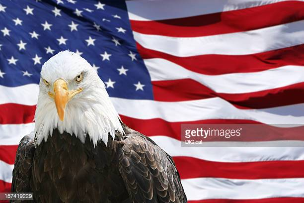 bald eagle - american flag - bald eagle with american flag stock pictures, royalty-free photos & images