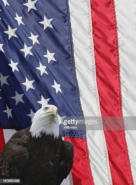 bald eagle american flag vertical background - bald eagle with american flag stock pictures, royalty-free photos & images