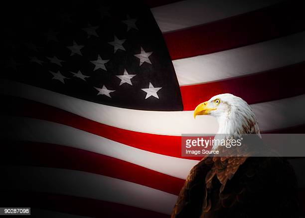 bald eagle and american flag - bald eagle with american flag stock pictures, royalty-free photos & images