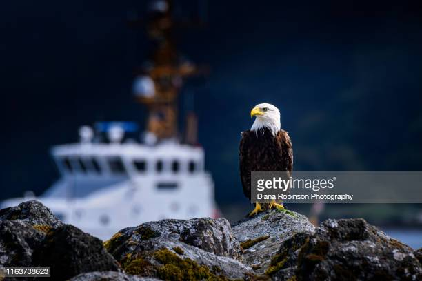 bald eagle and coast guard vessel at neah bay, olympic peninsula, washington state - coast guard stock pictures, royalty-free photos & images