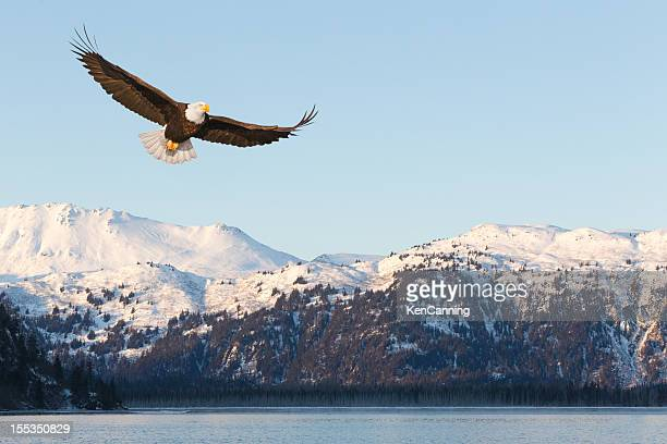 bald eagle and snow covered mountains - eagle stock pictures, royalty-free photos & images