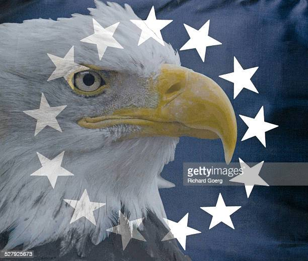 bald eagle and usa vintage flag - betsy ross flag stock pictures, royalty-free photos & images
