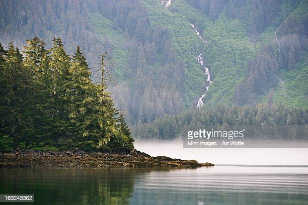 Bald eagle and waterfall, Glacier Bay National Park and Preserve, Alaska