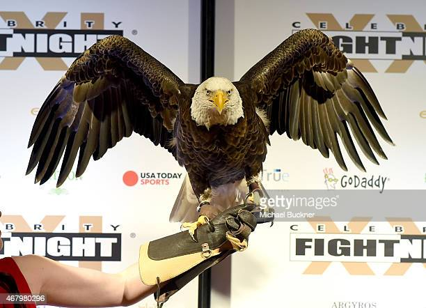 A bald eagle at Muhammad Ali's Celebrity Fight Night XXI at the JW Marriott Phoenix Desert Ridge Resort Spa on March 28 2015 in Phoenix Arizona