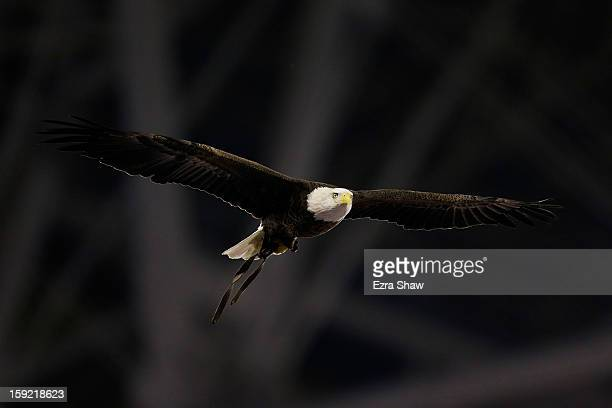 Bald Eagle flies prior to the start of the Tostitos Fiesta Bowl between the Oregon Ducks and the Kansas State Wildcats at University of Phoenix...