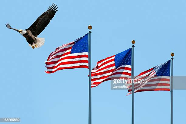 bald eagle flying past three american flags - bald eagle with american flag stock pictures, royalty-free photos & images